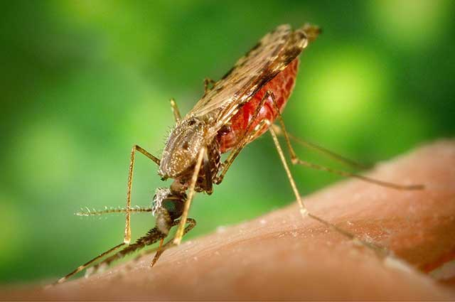 Kako se zaštiti od komaraca: i u domu i napolju?