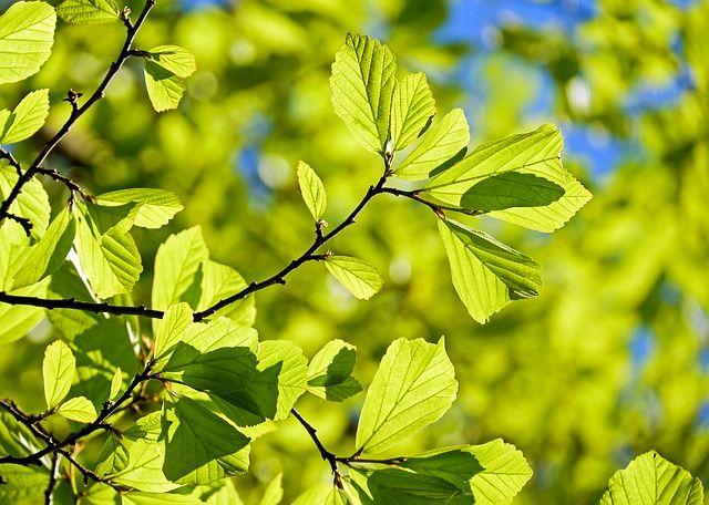 Nove sadnice za čistiju i zdraviju planetu