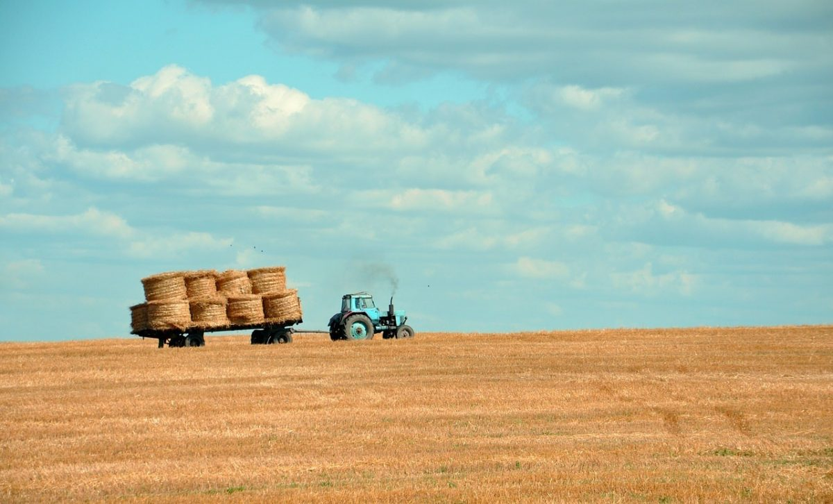 traktor-slama-polje