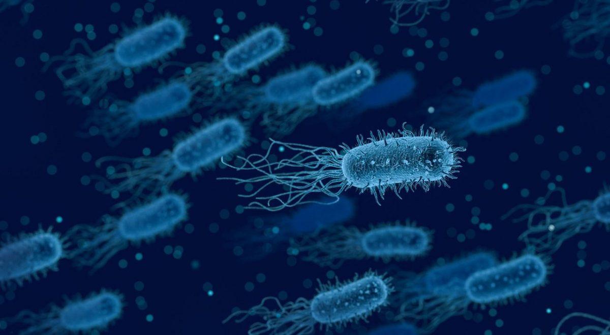 Heliko bakterija – spečifičnosti ove bakterije i njeno lečenje